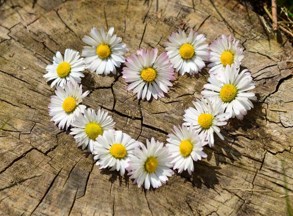 fiori-cuore