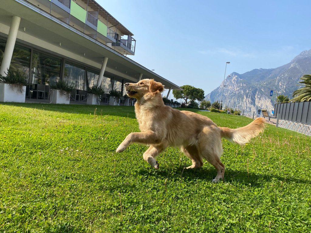 vacanza con cane lago di garda
